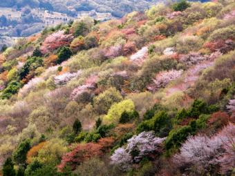 第4期テーマ「桜×地域」株式会社クラセル桜川 インタビュー記事